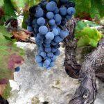 ston_wine_peljesac